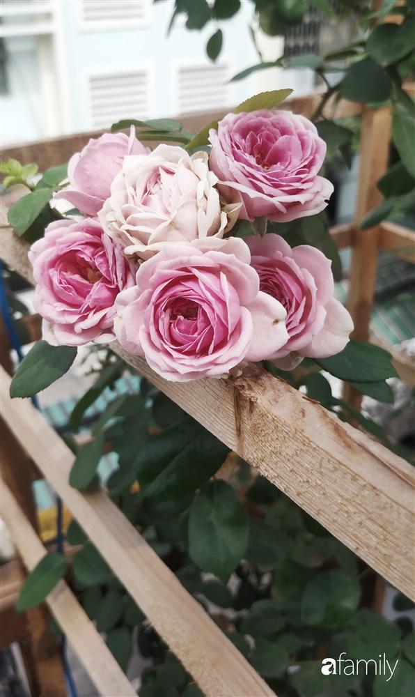 Ngôi nhà đẹp yên bình, lãng mạn nhờ người đàn ông đảm đang tự decor vườn và trồng đủ loại hồng ở Sài Gòn-25