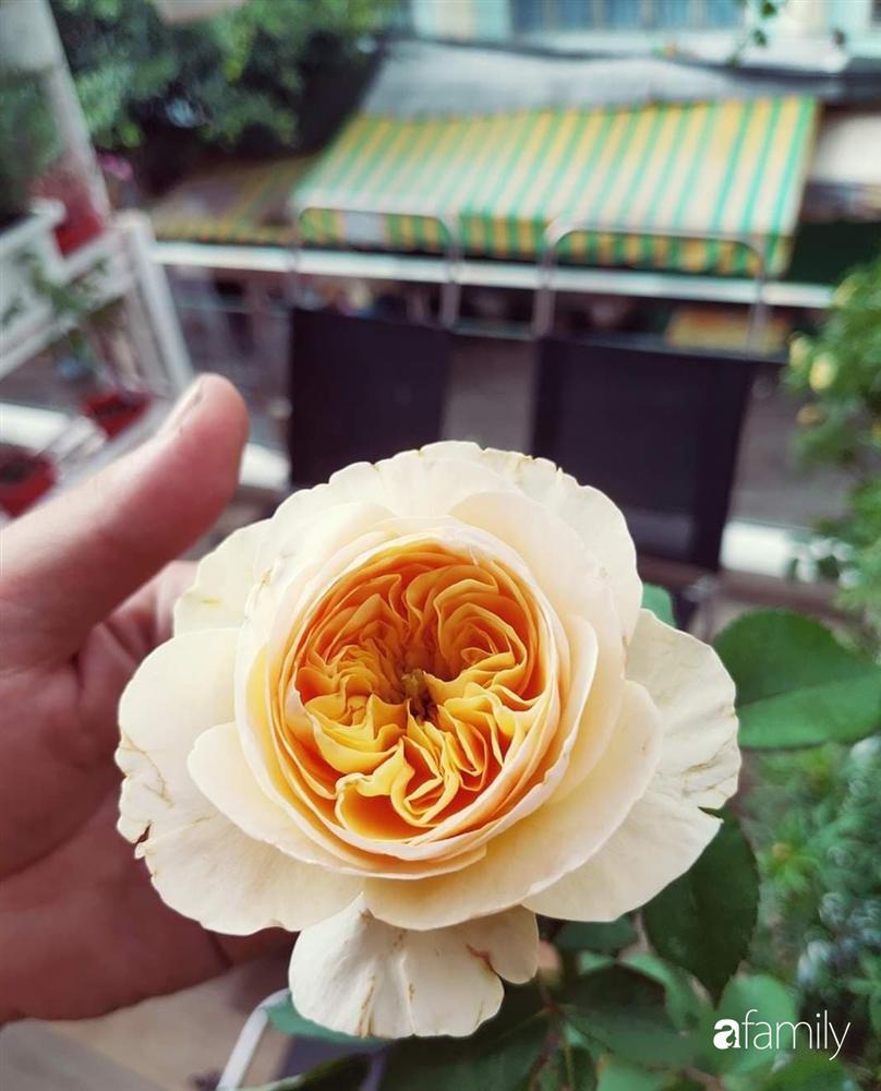 Ngôi nhà đẹp yên bình, lãng mạn nhờ người đàn ông đảm đang tự decor vườn và trồng đủ loại hồng ở Sài Gòn-26