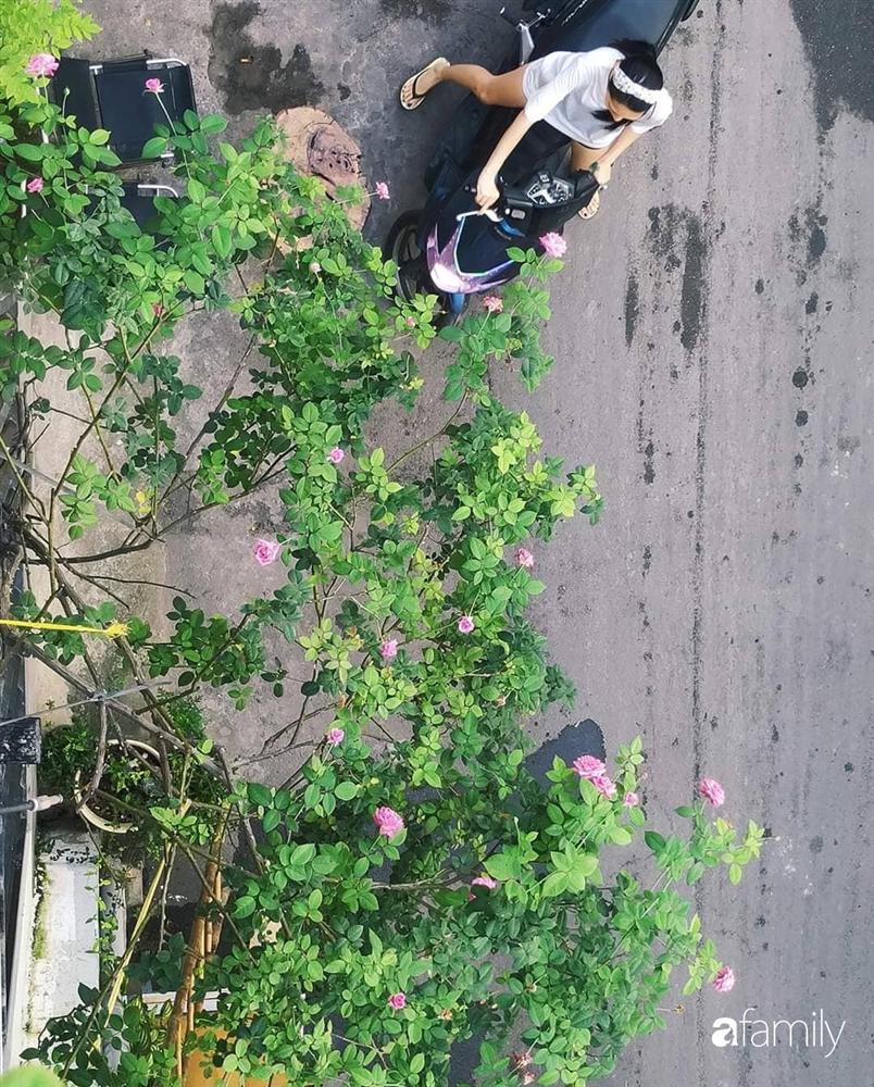 Ngôi nhà đẹp yên bình, lãng mạn nhờ người đàn ông đảm đang tự decor vườn và trồng đủ loại hồng ở Sài Gòn-30