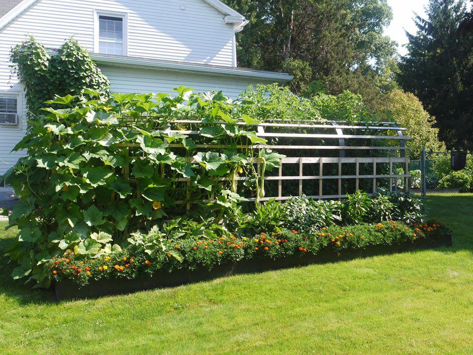 Khu vườn đủ loại rau quả đẹp như tranh của người phụ nữ trồng trọt từ năm 16 tuổi đến 63 tuổi-2