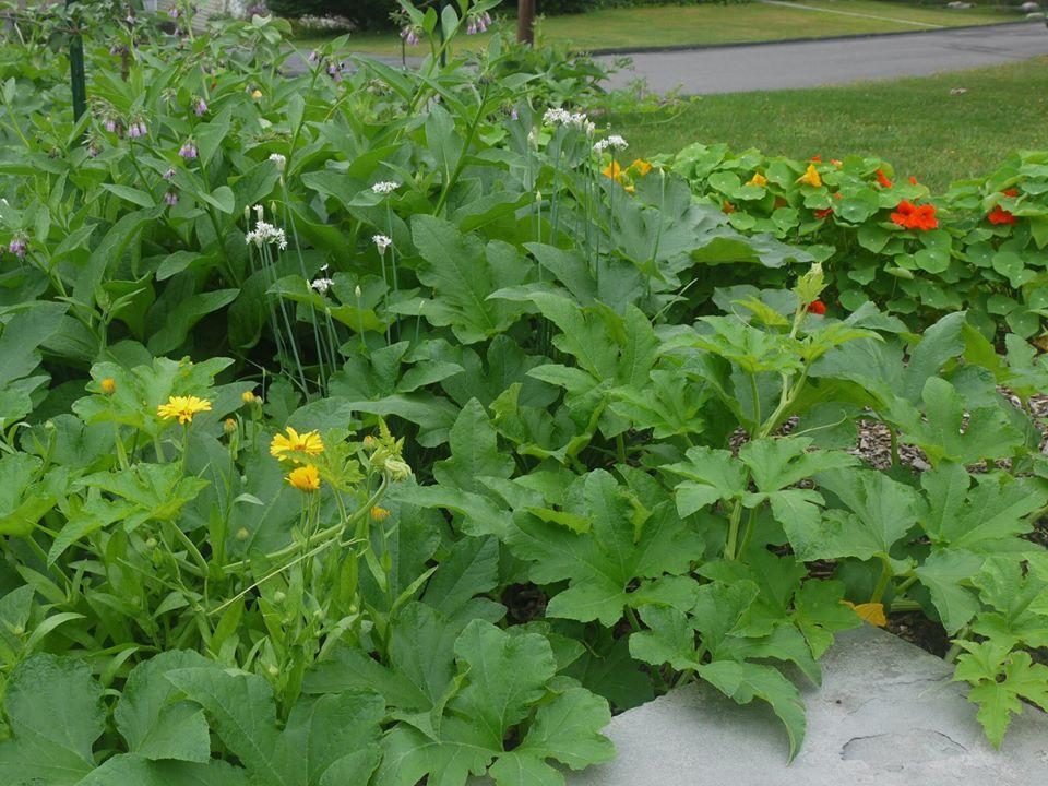 Khu vườn đủ loại rau quả đẹp như tranh của người phụ nữ trồng trọt từ năm 16 tuổi đến 63 tuổi-3