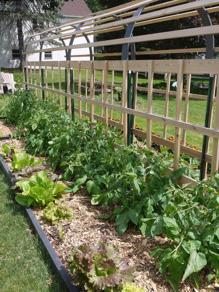 Khu vườn đủ loại rau quả đẹp như tranh của người phụ nữ trồng trọt từ năm 16 tuổi đến 63 tuổi-5