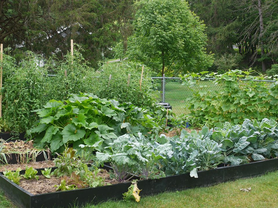 Khu vườn đủ loại rau quả đẹp như tranh của người phụ nữ trồng trọt từ năm 16 tuổi đến 63 tuổi-6