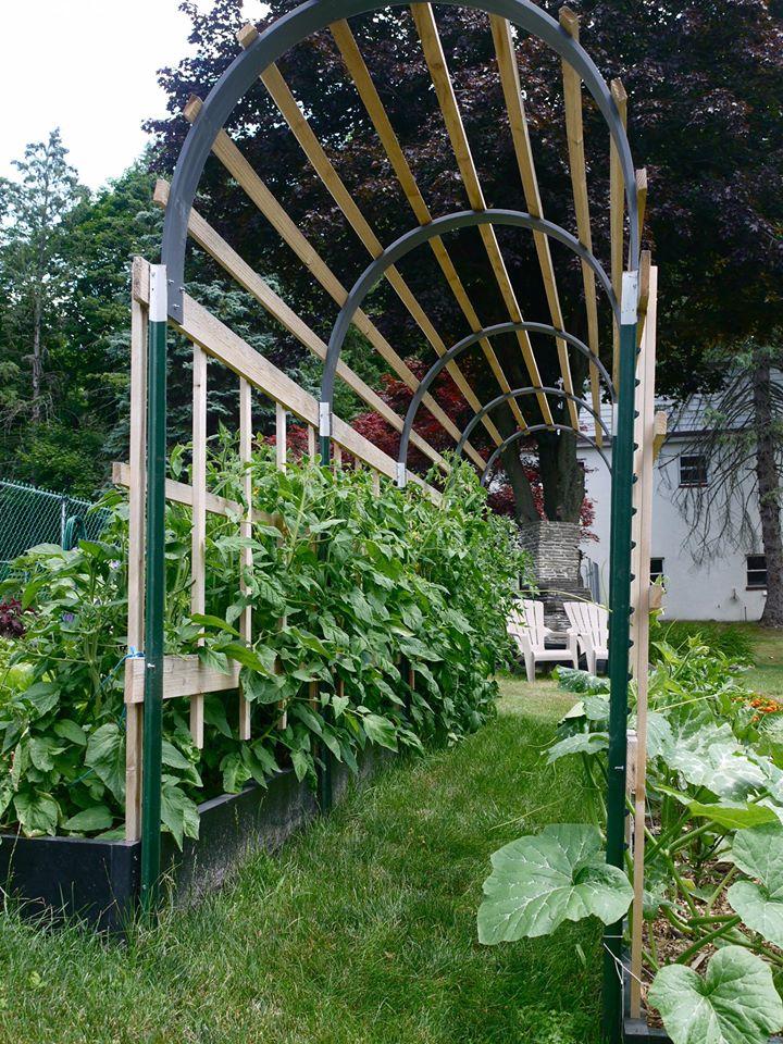 Khu vườn đủ loại rau quả đẹp như tranh của người phụ nữ trồng trọt từ năm 16 tuổi đến 63 tuổi-10