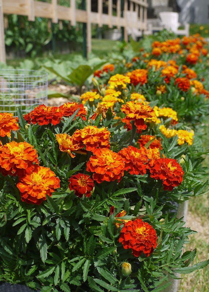 Khu vườn đủ loại rau quả đẹp như tranh của người phụ nữ trồng trọt từ năm 16 tuổi đến 63 tuổi-16