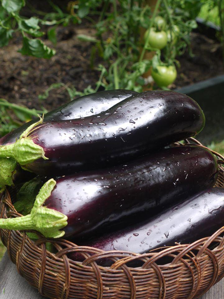 Khu vườn đủ loại rau quả đẹp như tranh của người phụ nữ trồng trọt từ năm 16 tuổi đến 63 tuổi-22