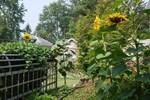 Cô gái trẻ xinh đẹp trở về nông thôn, tự tay trồng cả vườn rau quả sạch-26