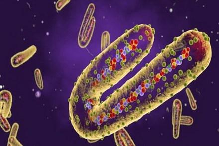 Những loại virus nguy hiểm nhất trên trái đất