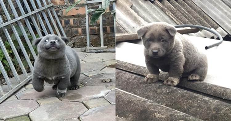 Lộ diện mẹ đẻ của chú chó Nguyễn Văn Dúi khiến dân mạng thắc mắc sao mẹ chân dài như hoa hậu mà con trai thì vừa lé vừa lùn-4