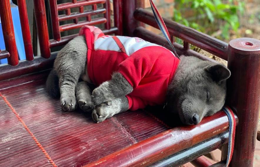 Lộ diện mẹ đẻ của chú chó Nguyễn Văn Dúi khiến dân mạng thắc mắc sao mẹ chân dài như hoa hậu mà con trai thì vừa lé vừa lùn-7