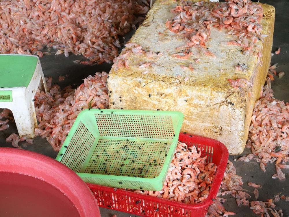 Biến hàng trăm kg tôm chết thành tôm nõn mỗi ngày-2