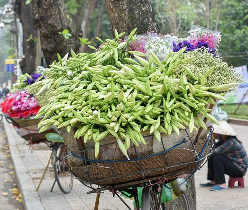 Hoa loa kèn rợp phố Hà Nội, rẻ bằng nửa năm ngoái nhưng không mấy ai mua-1