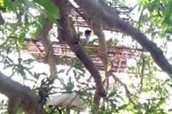 Người dân Ấn Độ cách ly ở trên cây