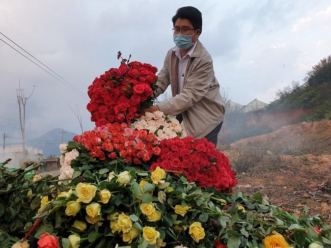 Xót xa nông dân cắt hoa đem đi đốt-3