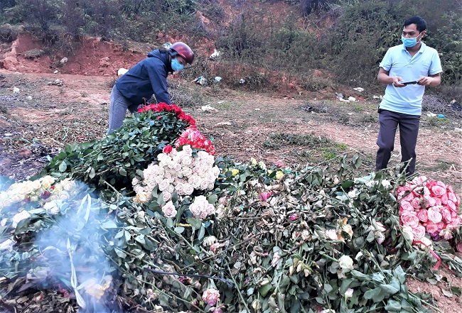Xót xa nông dân cắt hoa đem đi đốt-4