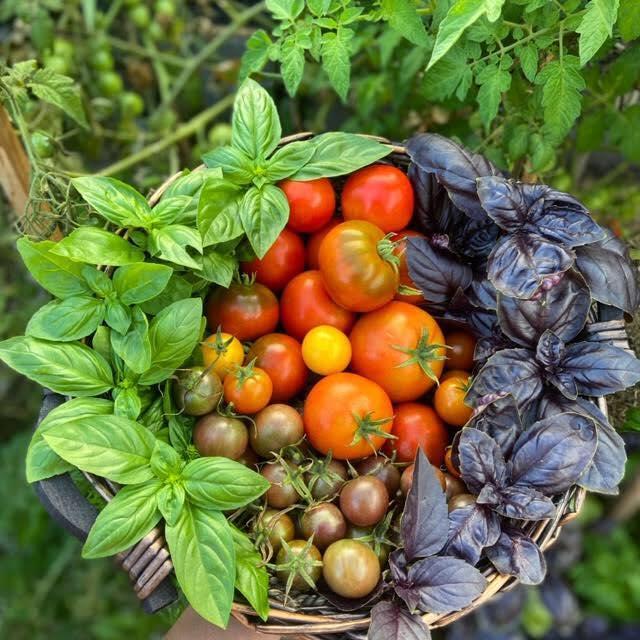 Cô gái trẻ xinh đẹp trở về nông thôn, tự tay trồng cả vườn rau quả sạch-2