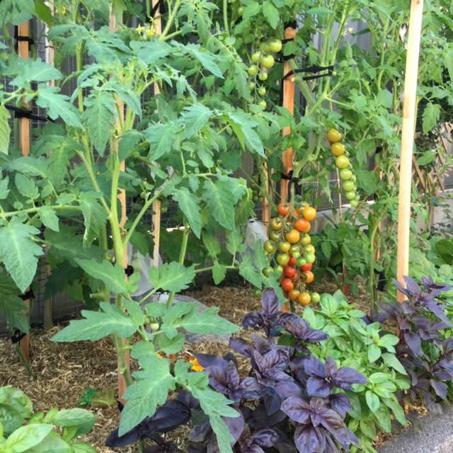Cô gái trẻ xinh đẹp trở về nông thôn, tự tay trồng cả vườn rau quả sạch-3