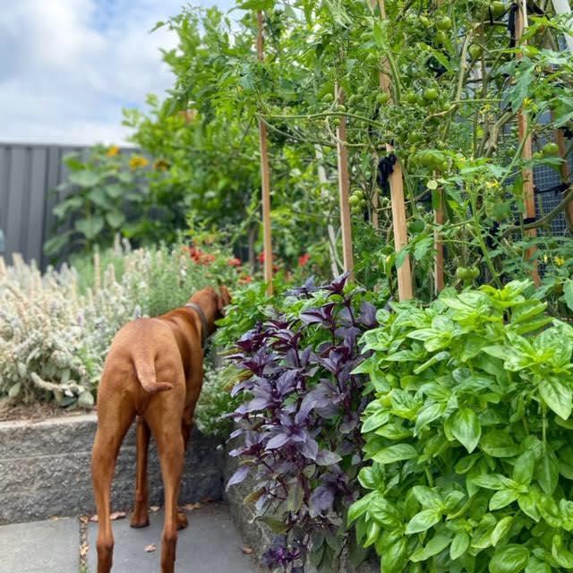 Cô gái trẻ xinh đẹp trở về nông thôn, tự tay trồng cả vườn rau quả sạch-5