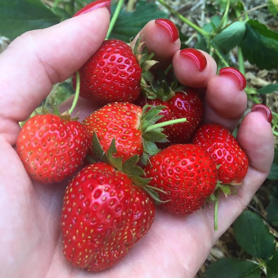 Cô gái trẻ xinh đẹp trở về nông thôn, tự tay trồng cả vườn rau quả sạch-9