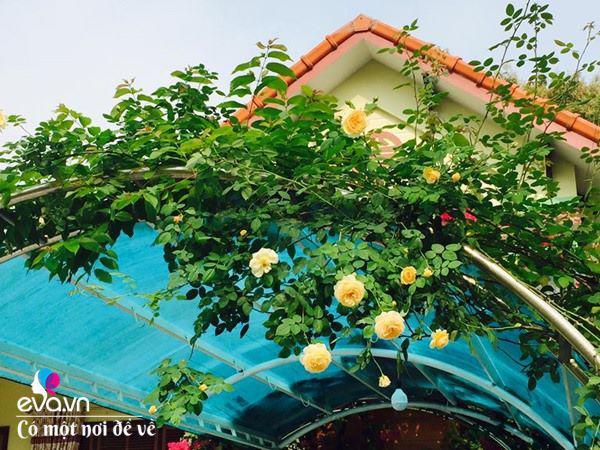 Cô giáo xứ Thanh cải tạo vườn trống, 4 năm sau có ngôi nhà hoa hồng đẹp như mơ-4