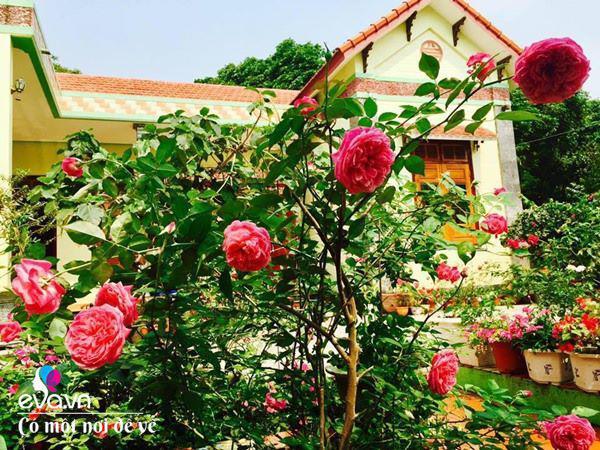 Cô giáo xứ Thanh cải tạo vườn trống, 4 năm sau có ngôi nhà hoa hồng đẹp như mơ-5