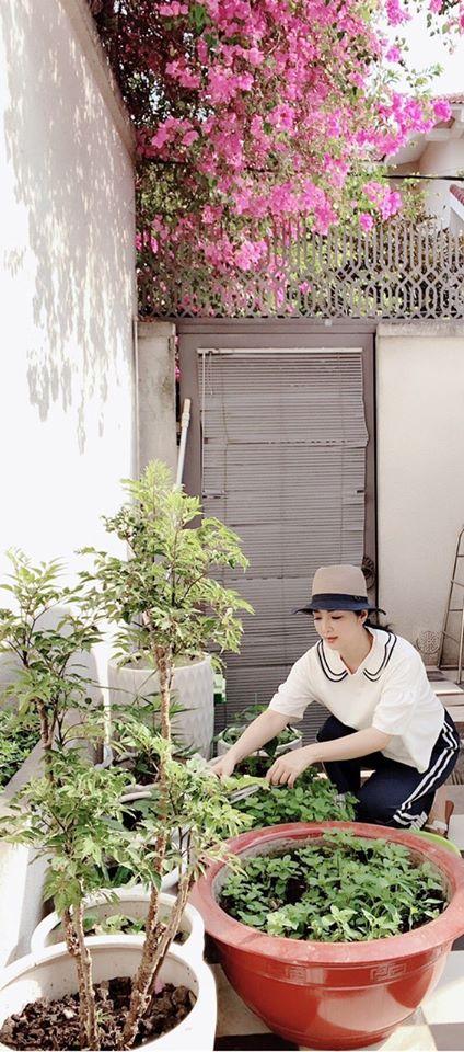 Khu vườn rau sạch trong biệt thự của Hoa hậu Đền Hùng Giáng My-1