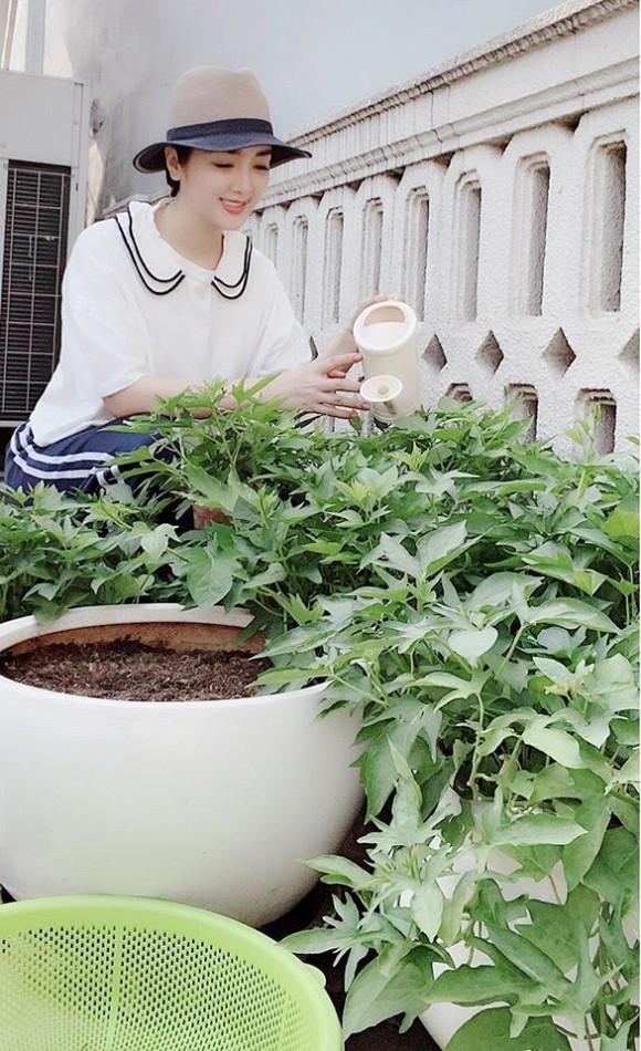 Khu vườn rau sạch trong biệt thự của Hoa hậu Đền Hùng Giáng My-6