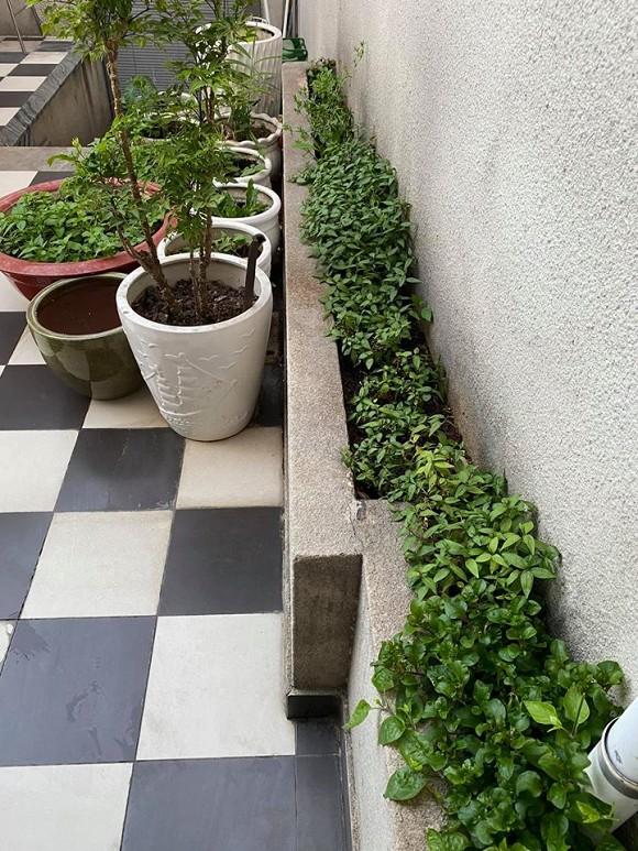 Khu vườn rau sạch trong biệt thự của Hoa hậu Đền Hùng Giáng My-14
