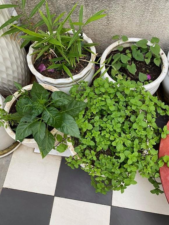 Khu vườn rau sạch trong biệt thự của Hoa hậu Đền Hùng Giáng My-18