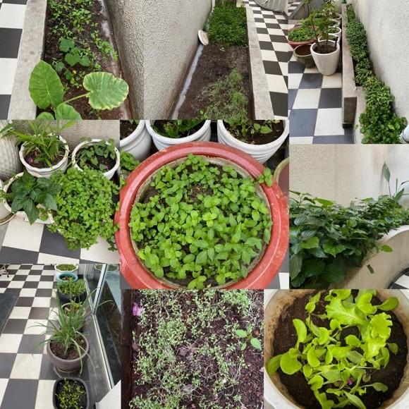 Khu vườn rau sạch trong biệt thự của Hoa hậu Đền Hùng Giáng My-19