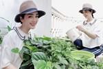 Khu vườn rau sạch trong biệt thự của Hoa hậu Đền Hùng Giáng My