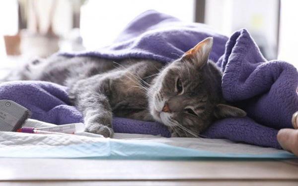 Hong Kong xác định 1 con mèo dương tính với virus SARS-CoV-2-1