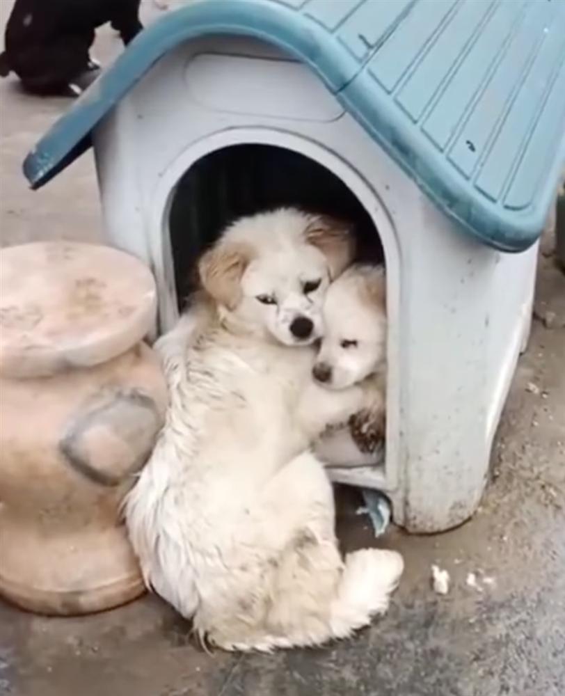 Chó con bị bệnh nặng, chó mẹ dùng hai chân trước ôm con với ánh mắt đau thương khiến mọi người phải cảm thán: Tình mẫu tử vô biên-4