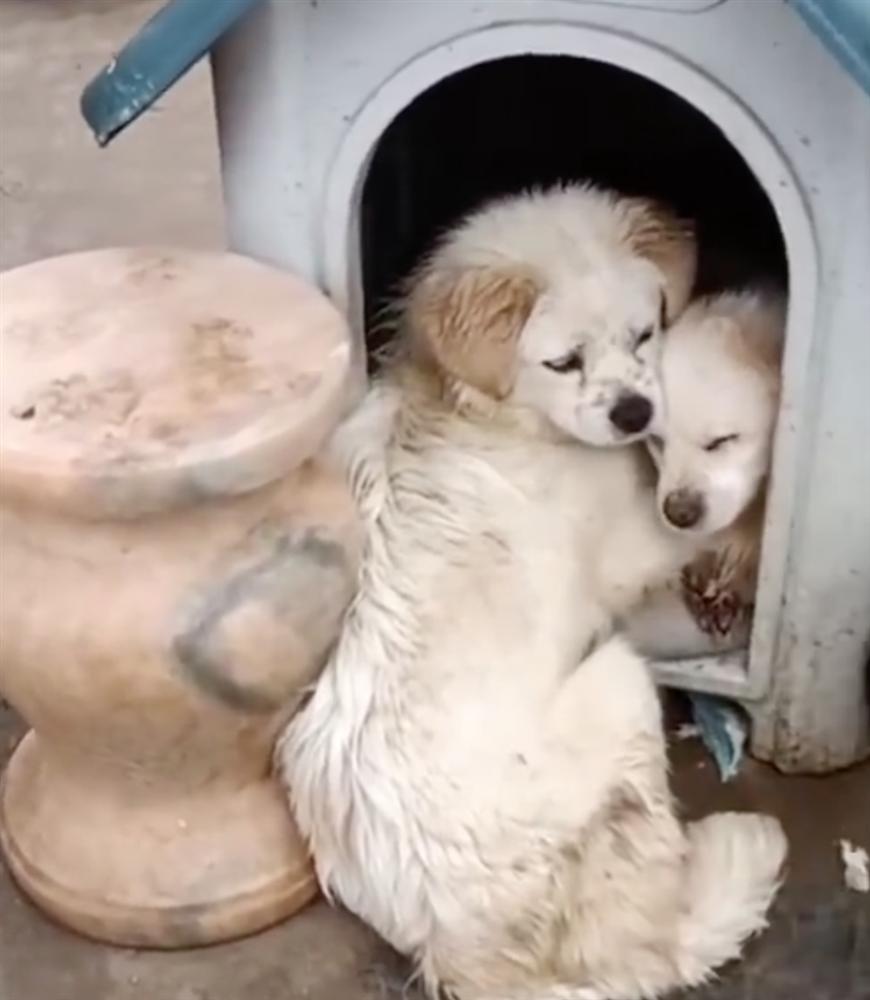 Chó con bị bệnh nặng, chó mẹ dùng hai chân trước ôm con với ánh mắt đau thương khiến mọi người phải cảm thán: Tình mẫu tử vô biên-5