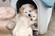 """Chó con bị bệnh nặng, chó mẹ dùng hai chân trước ôm con với ánh mắt đau thương khiến mọi người phải cảm thán: """"Tình mẫu tử vô biên'"""
