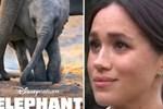 Meghan Markle gây tranh cãi trong dự án phim đầu tiên sau khi rời hoàng gia: Lời khen ngợi thì ít, lời chê từ các nhà phê bình thì nhiều