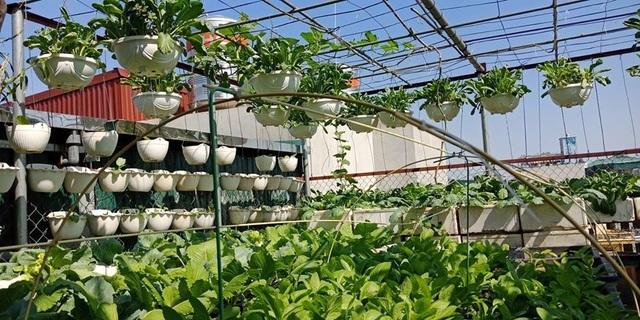Mãn nhãn khu vườn trên mây tốt như nông trại của ông bố đảm Hà Nội-1