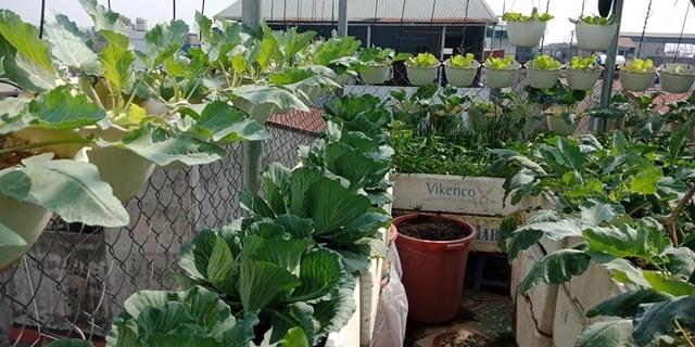 Mãn nhãn khu vườn trên mây tốt như nông trại của ông bố đảm Hà Nội-11