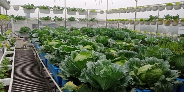 Mãn nhãn khu vườn trên mây tốt như nông trại của ông bố đảm Hà Nội-7