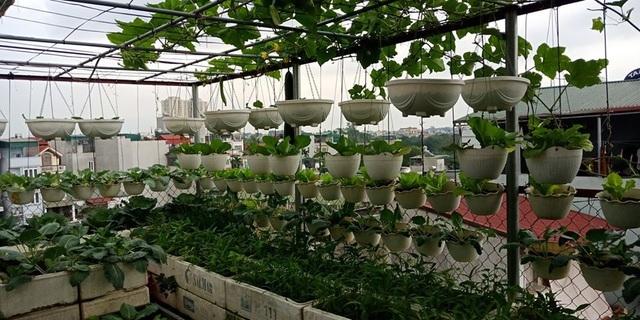 Mãn nhãn khu vườn trên mây tốt như nông trại của ông bố đảm Hà Nội-8