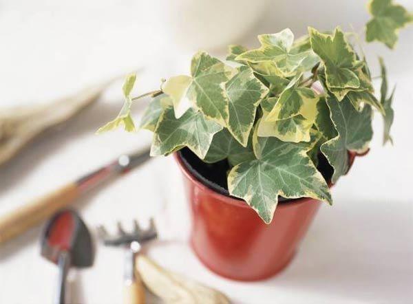 6 loại cây hút bức xạ cực tốt, làm việc tại nhà cũng nên mua đặt bàn ngay-1