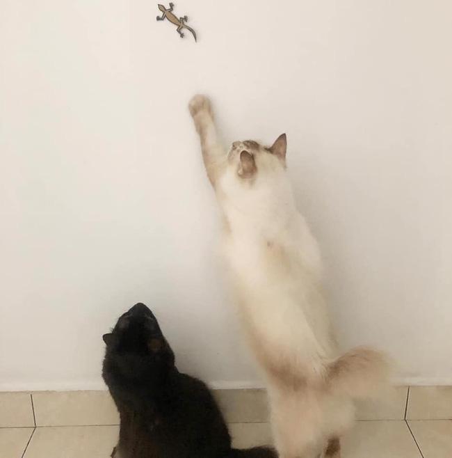 Sen bày trò cho các boss luyện tập thể thao nâng cao sức khoẻ nhưng nhìn đạo cụ mới thấy chủ tớ nhà mèo rảnh đến cỡ nào-2