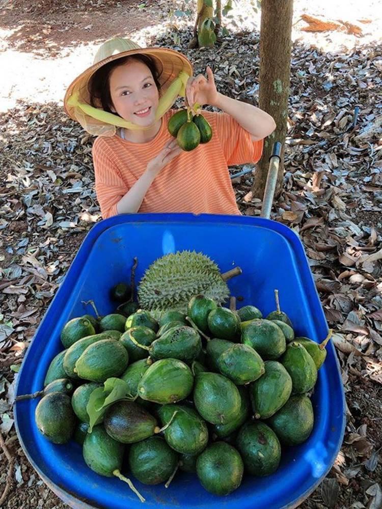 Về quê tránh dịch, Lý Nhã Kỳ đẩy xe rùa đi thu hoạch hoa quả trong nông trại 50 hecta-1