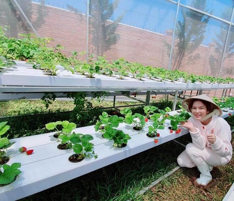 Về quê tránh dịch, Lý Nhã Kỳ đẩy xe rùa đi thu hoạch hoa quả trong nông trại 50 hecta-4