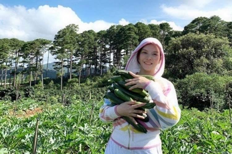Về quê tránh dịch, Lý Nhã Kỳ đẩy xe rùa đi thu hoạch hoa quả trong nông trại 50 hecta-6