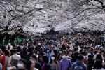 Covid-19 tại Nhật Bản: Tin xấu ngày một dồn dập, Tokyo có nguy cơ trở thành 'New York thứ 2'?