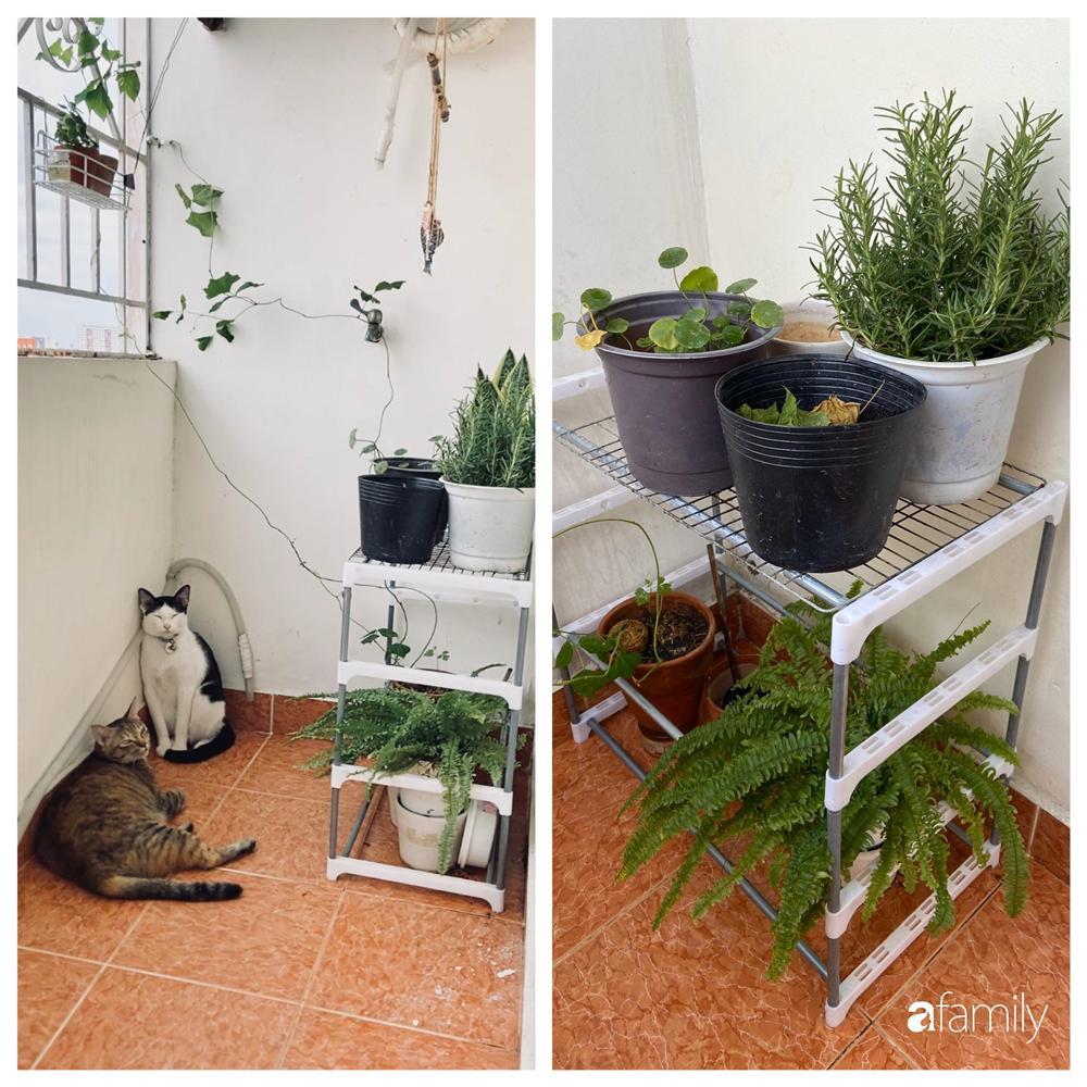 Nghỉ ở nhà dài ngày, chàng trai Sài Gòn biến ban công 4m² nhàm chán thành khu vườn xanh mướt đủ loại cây-2