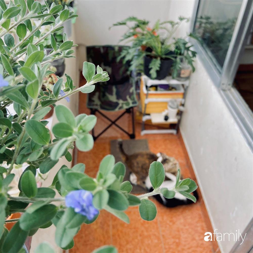 Nghỉ ở nhà dài ngày, chàng trai Sài Gòn biến ban công 4m² nhàm chán thành khu vườn xanh mướt đủ loại cây-4