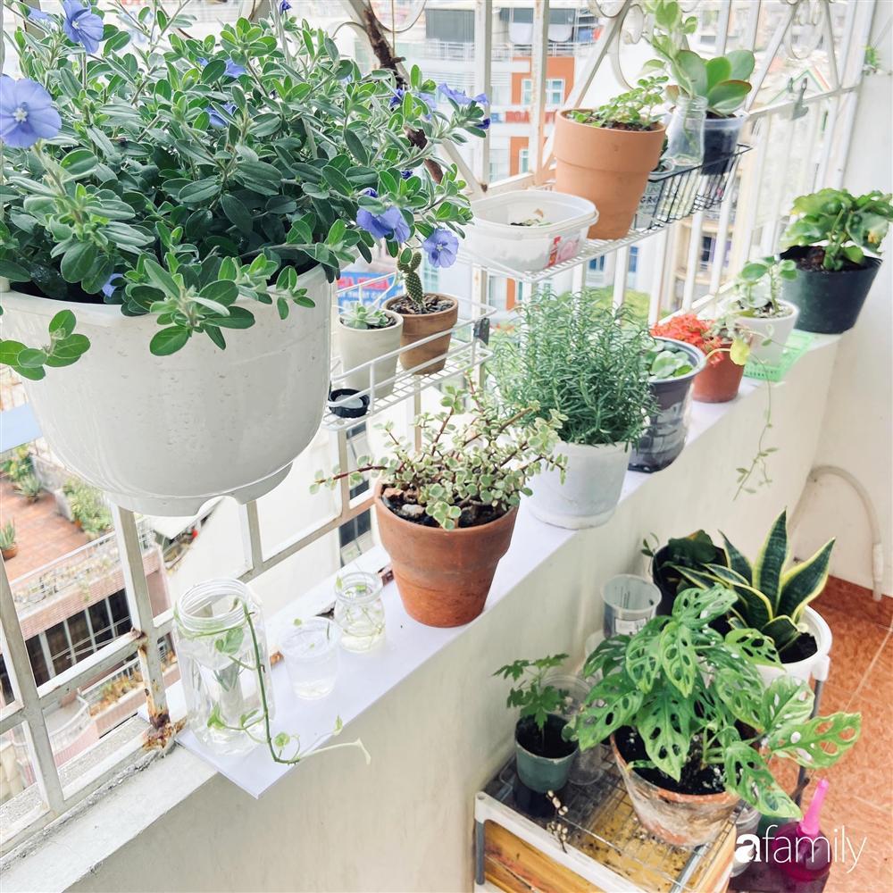 Nghỉ ở nhà dài ngày, chàng trai Sài Gòn biến ban công 4m² nhàm chán thành khu vườn xanh mướt đủ loại cây-6