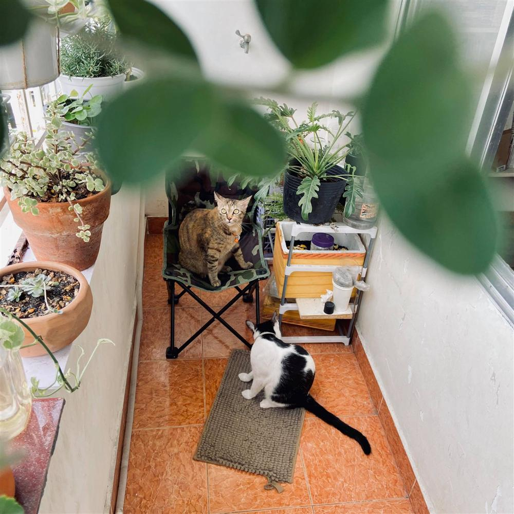 Nghỉ ở nhà dài ngày, chàng trai Sài Gòn biến ban công 4m² nhàm chán thành khu vườn xanh mướt đủ loại cây-8